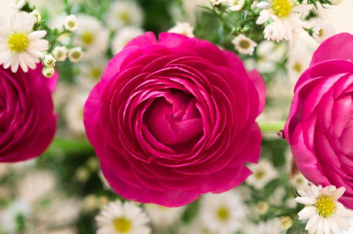 Sebeláska - růže
