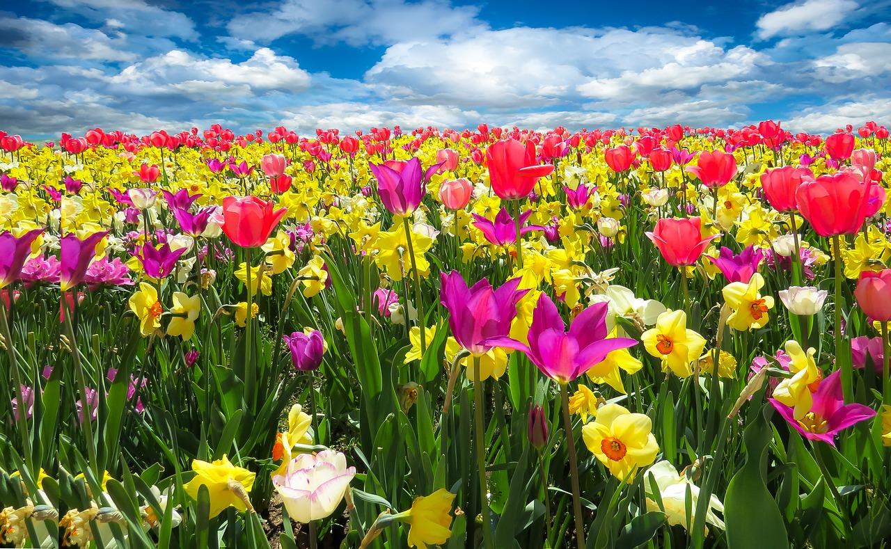 květiny - sebeláska