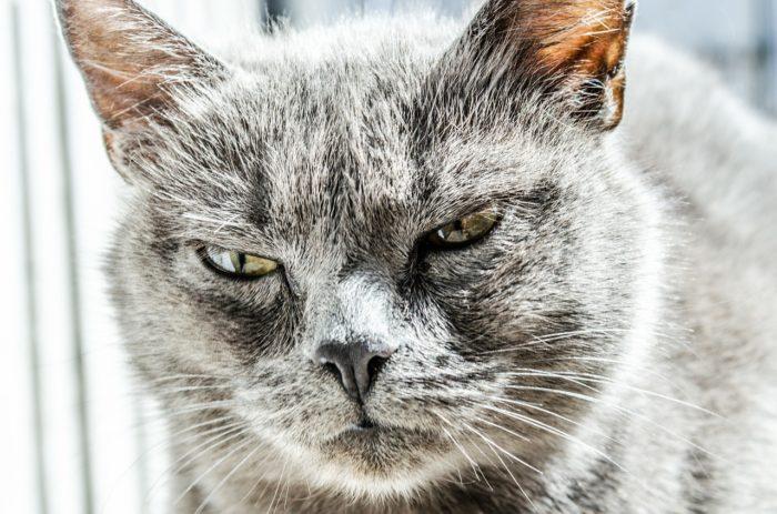 negativní emoce rozlobený kocour