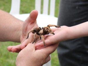 arachnofobie