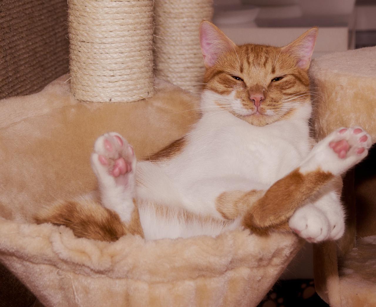 Jak předcházet psychickým problémům fotografie spokojené kočky