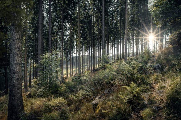 les léčivá moc pozitivní emoce procházka