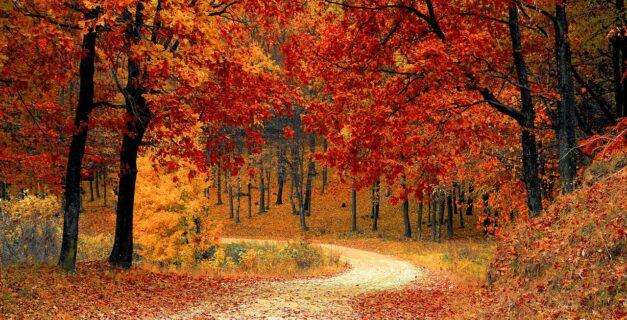 podzim rytmus roku